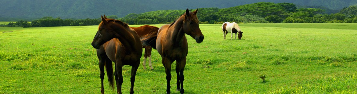 freegreatpicture.com-6652-grass-and-horse-hd